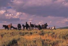 通配牧群的马 免版税库存图片