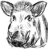 通配的公猪 库存图片