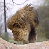 通配的动物 图库摄影