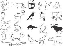 通配的动物 免版税库存照片