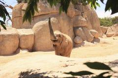 通配的大象 库存照片