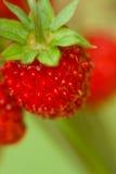 通配的接近的草莓 库存图片