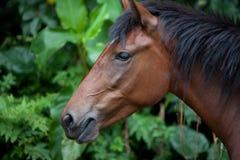 通配的接近的马 免版税图库摄影