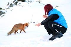 通配的狐狸 免版税库存图片