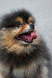 通配的狗 免版税库存照片