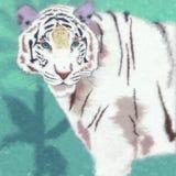 通配的猫 白色老虎 免版税库存照片