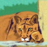 通配的猫 美洲狮 图库摄影