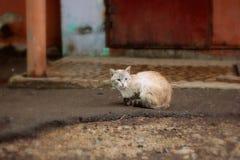 通配的猫 库存照片