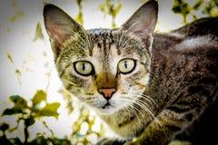 通配的猫 免版税库存图片