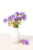 通配的花瓶 库存照片