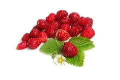 通配的草莓 免版税库存图片