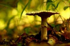 通配的蘑菇 图库摄影