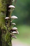 通配的蘑菇 免版税库存图片
