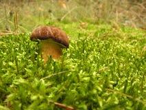 通配的蘑菇 免版税图库摄影