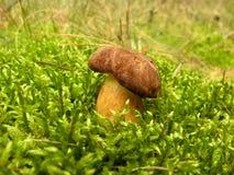 通配的蘑菇 免版税库存照片