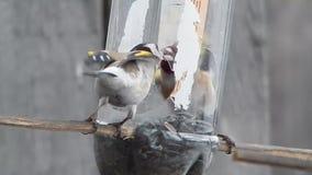 通配的鸟 影视素材