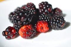 通配的黑莓 库存图片