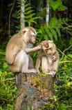 通配的猴子 免版税库存照片