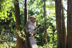 通配的猴子 免版税库存图片
