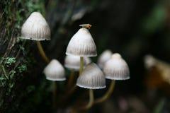 通配秋天英国森林生长的蘑菇 免版税库存图片