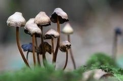 通配秋天英国森林生长的蘑菇 库存照片