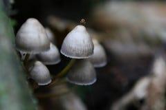 通配秋天英国森林生长的蘑菇 图库摄影