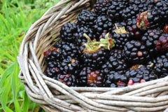通配篮子的黑莓 免版税库存图片