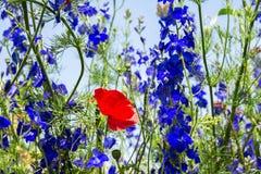 通配美丽的花 免版税库存照片