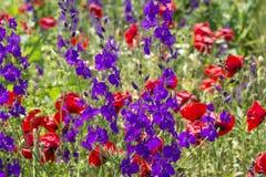 通配美丽的花 库存图片