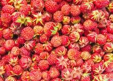 通配背景自然的草莓 库存图片
