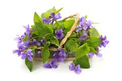 通配花的春天 库存照片