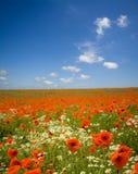 通配花的草甸 库存照片