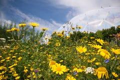 通配花的草甸 库存图片
