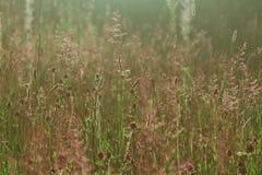 通配草甸的夏天 库存照片
