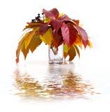 通配葡萄的叶子 图库摄影
