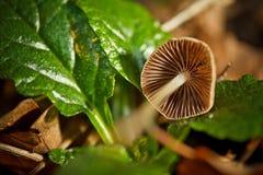 通配蘑菇 库存照片