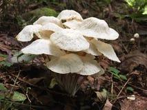 通配蘑菇 免版税库存照片