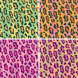 通配豹子的模式 库存例证