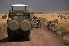 通配非洲动物国家公园的serengeti 免版税库存照片
