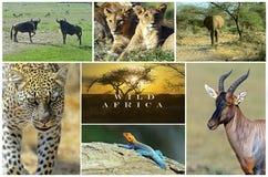 通配非洲的动物 免版税库存照片