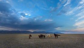 通配马的干草原 库存照片