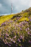 通配高山的花 免版税图库摄影