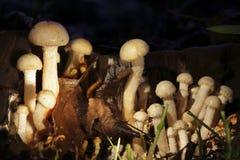 通配黄昏的蘑菇 免版税库存图片