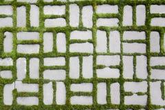 仿造与一棵发芽的草II 免版税库存图片