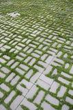 仿造与一棵发芽的草VI 免版税库存照片