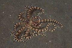 仿造章鱼 库存图片