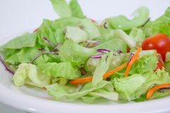 1道蔬菜沙拉 库存照片