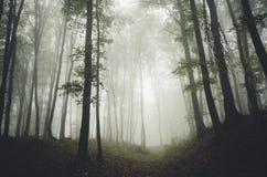 道路低谷一个神奇森林 免版税库存图片