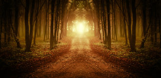 道路低谷日出的一个不可思议的森林