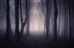 道路低谷有神奇雾的幻想森林 免版税库存图片